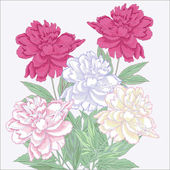Bouquet with white and pink peonies — Stock Vector