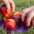 Taking a fruit nectarine — Stock Photo #52915763