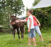 Children stroking horse — Photo