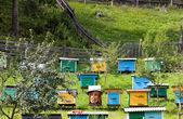 Bee-garden — Stok fotoğraf