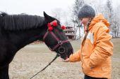 Jong meisje een paard voederen — Stockfoto