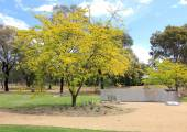Golden yellow tree in park setting — Stockfoto