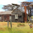 Old and dilapidated Australian country homestead — Stock Photo #58130683
