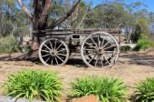 Old Australian settlers horse drawn wagon — Stock Photo