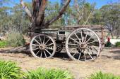 Old Australian settlers horse drawn wagon — Stock Photo