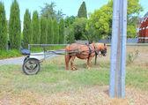 Shetland pony met buggy — Stockfoto