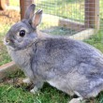 Grey baby rabbit — Stock Photo #70554821