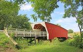 Cedar Bridge under trees — Stock Photo