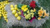 Flowers and apple on hay — Stock Photo