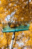 Autumn rake — Stock Photo
