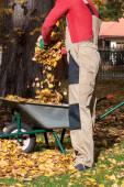 Throwing leaves into wheelbarrow — Stock Photo