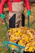 Leaves on wheelbarrow — Stock Photo