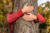 Tree hug — Stock Photo