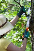 Gardener cutting branches — Stock Photo