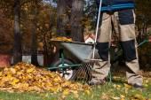 Man raking the leaves — Stok fotoğraf