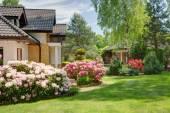 Beauty spring-flowering shrubs — Stock Photo