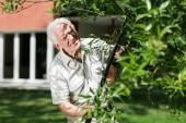 Elderly gardener cuts the trees — Stock Photo