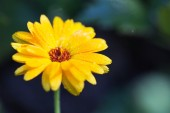 Yellow flower on a green background — Stock Photo