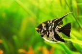 Aquarium with fishes — Stock Photo