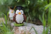 Owlet student — Stock Photo