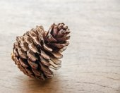 Dried pine cones at the table — Stock Photo