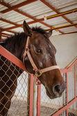 Paard in schuur achter kooi — Stockfoto