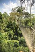Canopy walkway in Kakum National Park, Ghana, West Africa — Stock Photo