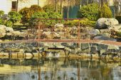 A fragment of the lake in the park — Stock Photo