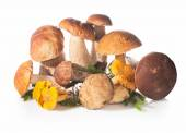Fresh forest edible mushrooms on a white background. — Stock fotografie