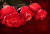 Red rose on a dark background with bokeh. Romantic card with spa — Φωτογραφία Αρχείου