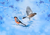 Blue winter background with bird bullfinches. Christmas card wit — Stockfoto