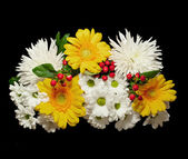 Bouquet of white flowers of a chrysanthemum, yellow Transvaal da — Stock Photo