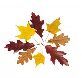 Group of red, yellow and brown autumn leaves of oak and maple. — Stock Photo