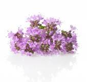 Tymián květiny a listy close-up na bílém pozadí. — Stock fotografie