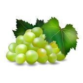 Bunch of grapes3 — Stockvektor