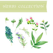 Vector collection of watercolor herbs on white background. — Wektor stockowy