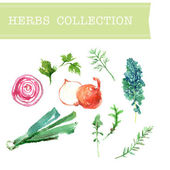 Vector collection of watercolor herbs on white background. — Stock Vector