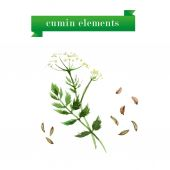 Watercolor herbs collection of cumin on white background. — Stock Vector