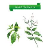 Vector set of watercolor mint brunches. Herbs elements design. — Stock Vector