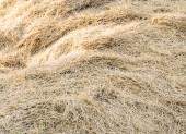 Background dry hay — Stock Photo