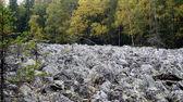 Stone river  — Stock Photo