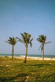 Palms against blue sky — Stock Photo