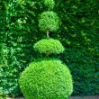 Topiary tree — Stock Photo #69090343