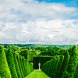 Conical hedges lines and lawn, Versailles Chateau, France — Stock Photo #69090377