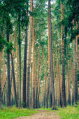 In the wood — Stock Photo
