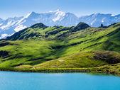 Swiss beauty, Grindenwald, Switzerland. — Stock fotografie