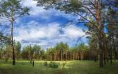 在树林里的结算 — 图库照片