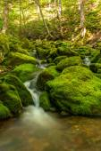 Small forest stream near Third Vault Falls — Stock Photo
