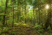 Moose Horn Trail Path — Stock Photo