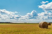 Hay bales on a farm along the ocean with the Confederation Bridg — Stock Photo
